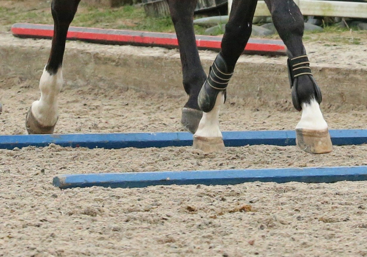 Six ways to exercise your horse without getting in the saddle