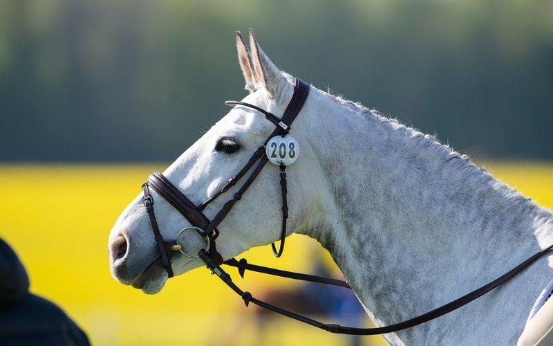 Normal post horse vision header
