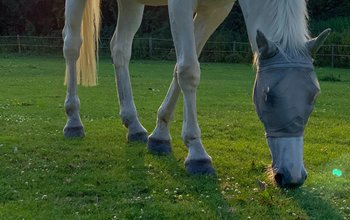 Grid post horse grazing 3