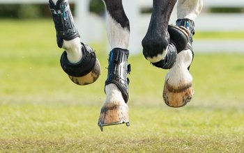 Grid post horse hooves cantering with studs