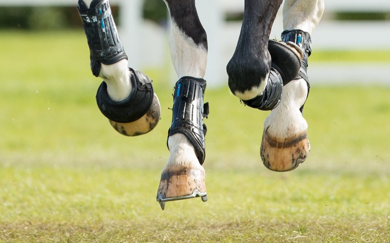 Normal post horse hooves cantering with studs
