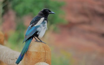 Grid post superstitions magpie