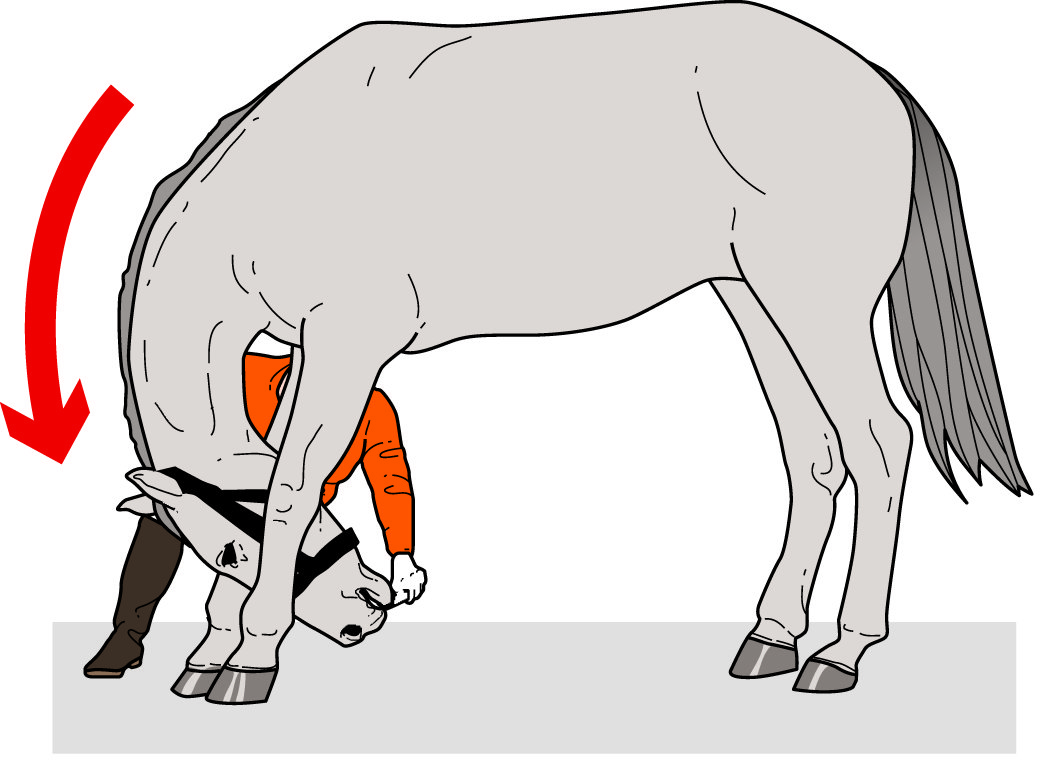 British Eventing Life | Five core exercises for horses to