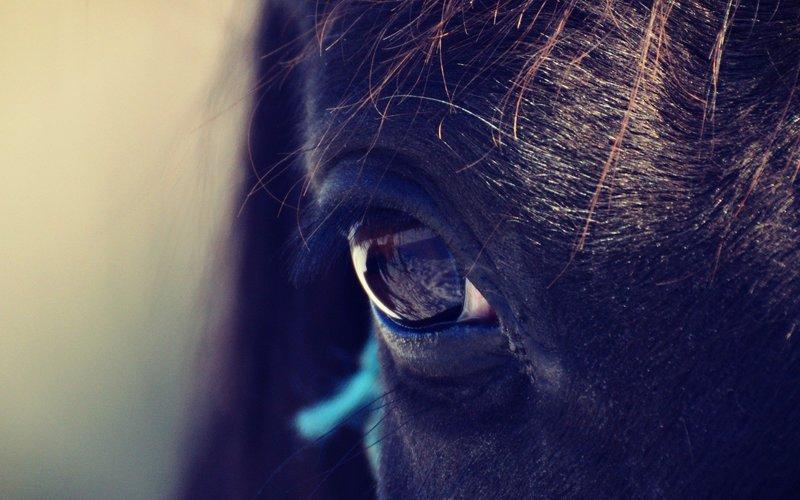 Normal post horseeye