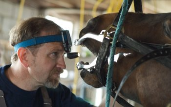 Grid post equine dentistry pete markham