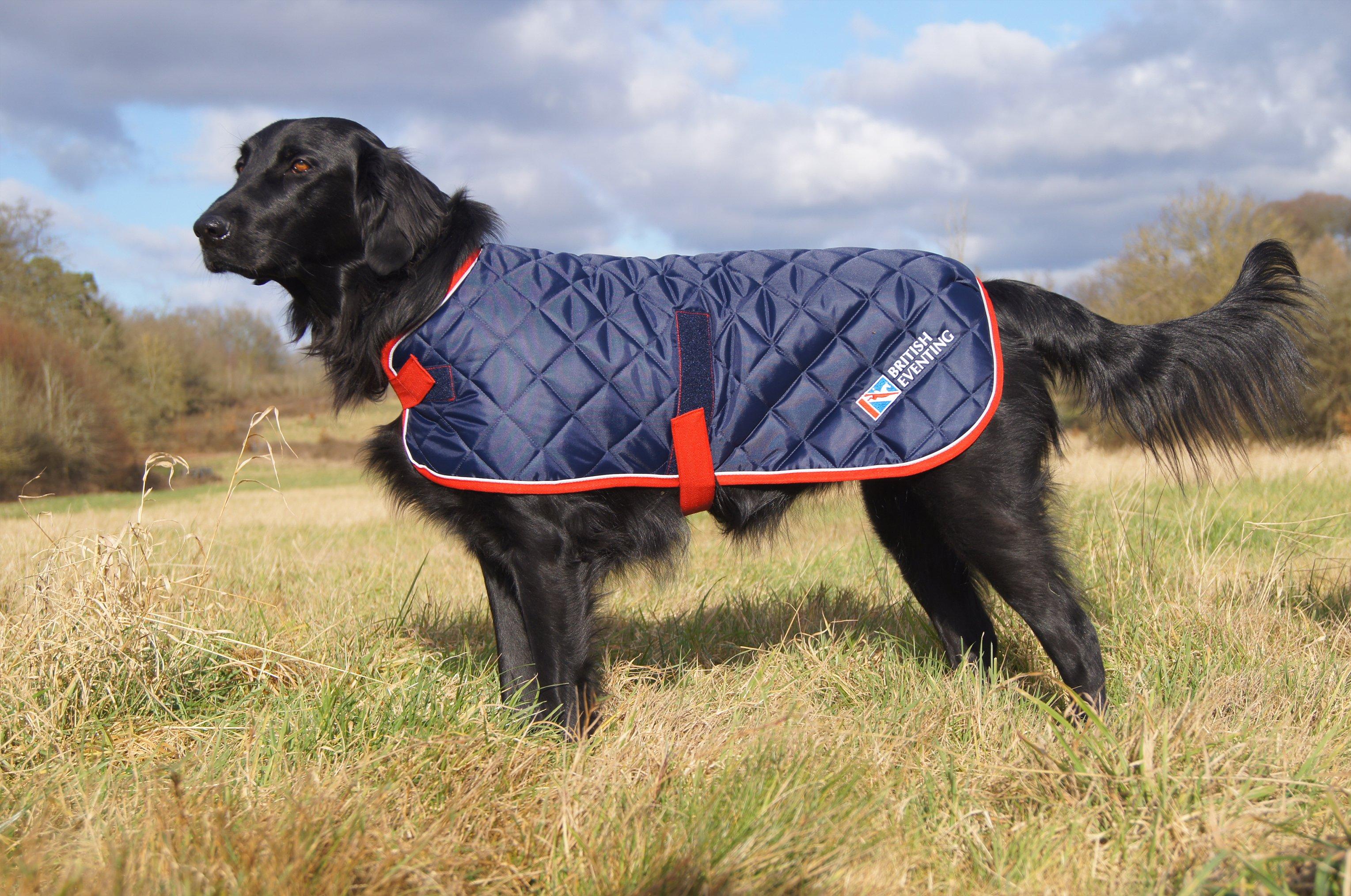 Wainwrights Grain Free Dog Food >> British Eventing Life | Meet the models behind the new BE Dog Coat