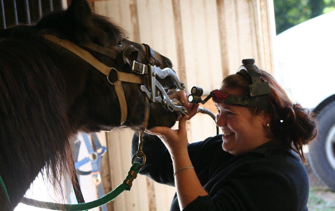 Feature equine dentist
