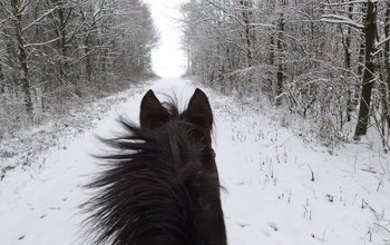 Grid post winter workout for horses